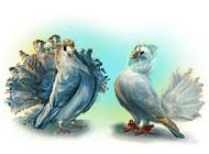 Полеты фантазии. Два голубя. Коллекционное издание